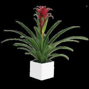 P11 Bromeliad Beauty